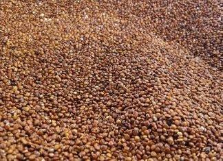 Kañiwa, el cereal que sustituirá a la quinoa