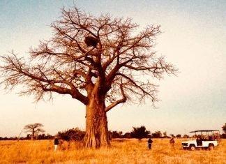Sé un protagonista de Memorias de África
